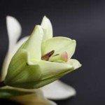 img-flower01