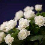 img-flower03